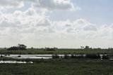 La Grande Brière - MK3_4541_DXO.jpg