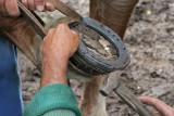 Maréchal-ferrand au travail sur un cheval d'attelage de Bréca - IMG_0301_DXO.jpg