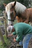 Maréchal-ferrand au travail sur un cheval d'attelage de Bréca - IMG_0310_DXO.jpg