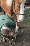 Maréchal-ferrand au travail sur un cheval d'attelage de Bréca - IMG_0318_DXO.jpg