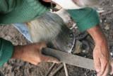 Maréchal-ferrand au travail sur un cheval d'attelage de Bréca - IMG_0326_DXO.jpg