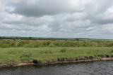 Découverte du sud de la Grande Brière - IMG_0332_DXO.jpg