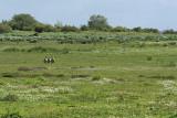 Découverte du sud de la Grande Brière - MK3_4594_DXO.jpg