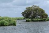 Balade en barque dans la Grande Brière, près de St-André-des-Eaux - MK3_4609_DXO.jpg