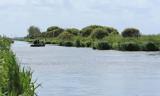 Balade en barque dans la Grande Brière, près de St-André-des-Eaux - MK3_4616_DXO.jpg