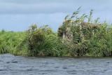 Balade en barque dans la Grande Brière, près de St-André-des-Eaux - MK3_4630_DXO.jpg