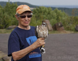 Linda with an adult Broad-winged Hawk