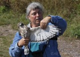 Margie with the adult Broad-winged Hawk