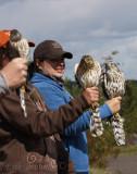 Sharp-shinned Hawk (left), Cooper's Hawk (middle), Northern Goshawk (right)
