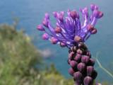 A little flower at the Ligure Sea coast line, Italy
