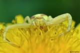 Ragni-  Araneae - Spiders