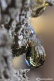 Goccia di resina -  Drop of resin