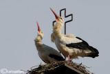 Cicogna bianca & Trujillo
