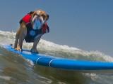 Surf Dog 'Dozer'