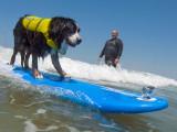 Surf Dog Nani