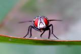 Garden Fly