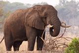 Elephant at Mosi-oa-Tuniya, Livingstone