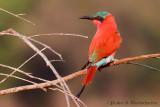 Portfolio: Birds of Africa