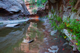 Call o' the Canyons: West Fork, Oak Creek