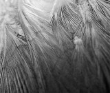 Ice feathers