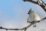 Oiseaux - 2011 - Birds
