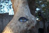 Rhodes Palace Yard EYE Tree.jpg