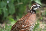 2012 Birds and Mammals
