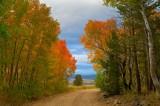 Eastern Sierra fall color 2011