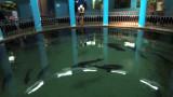 Aquarium Sewastopol