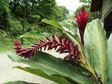 Tropical plant everywhere.