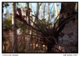 Corkscrew Swamp 2007
