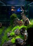Theme Aquarium