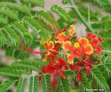Malinche bloom