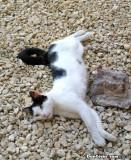 Casco Viejo kitty