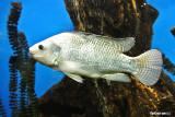 Aquarium at the Panama Canal Museum
