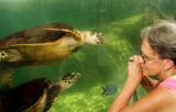 Turtle Whisperer