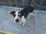 Belize City stray dog