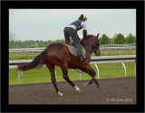 Keeneland Early Morning Workout