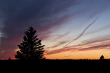 cypress hills sunset 070111_MG_9870
