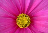 Flower portraits.jpg