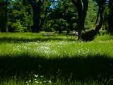 Ickworth garden in summer.jpg