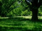 Ickworth house woods.jpg