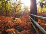 King's Lynn Autumn colours1.jpg