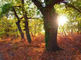 King's Lynn Autumn colours2.jpg