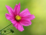 Portrait of a flower.jpg