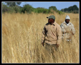 Tracking Cheetah, Little Kwara