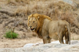 Mammals South Africa - Dieren Zuid Afrika