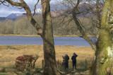 WeBS Count day at Wards Pond, Loch Lomond NNR