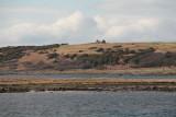 Ruined cottage on Ardpatrick Point