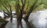River Clyde at Baron's Haugh RSPB reserve